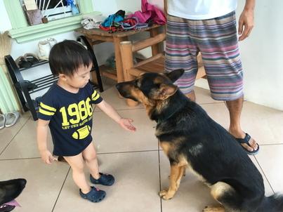 犬のお世話